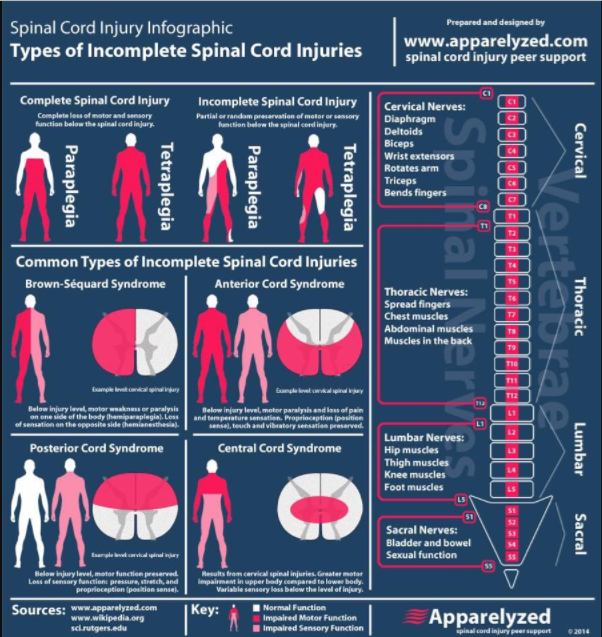 Spinalcordinjurychart